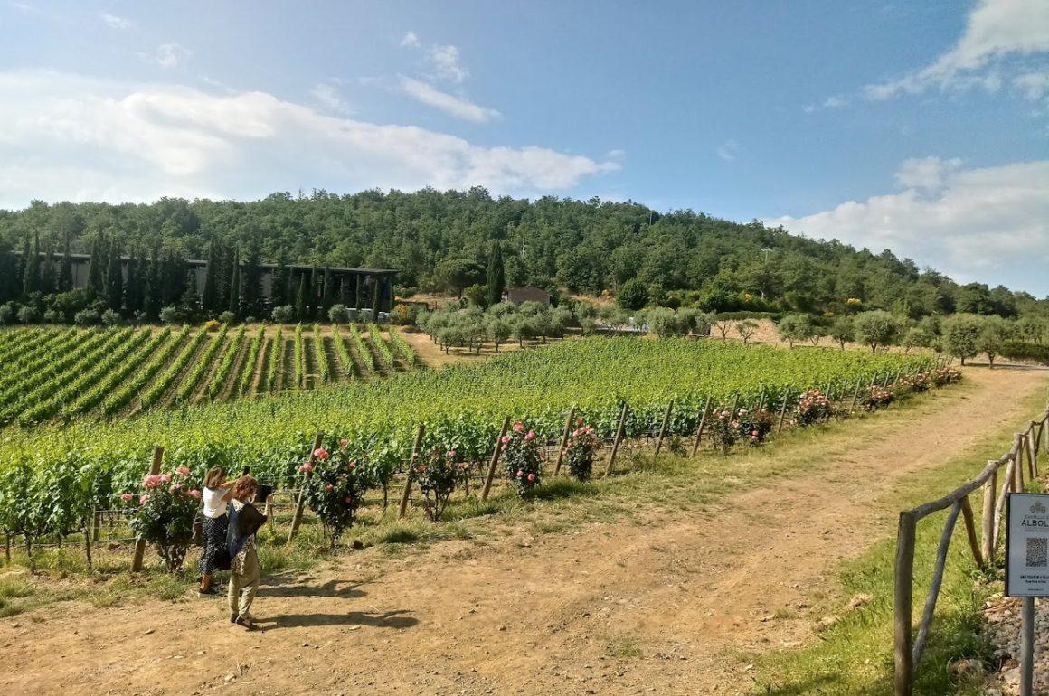 Degustação de vinhos na Toscana