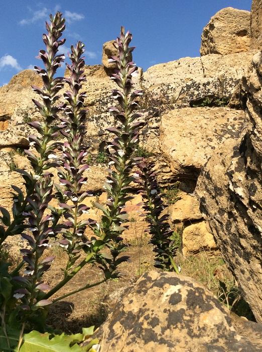 Agrigento Vale templos Acanto - Vale dos Templos na Sicília